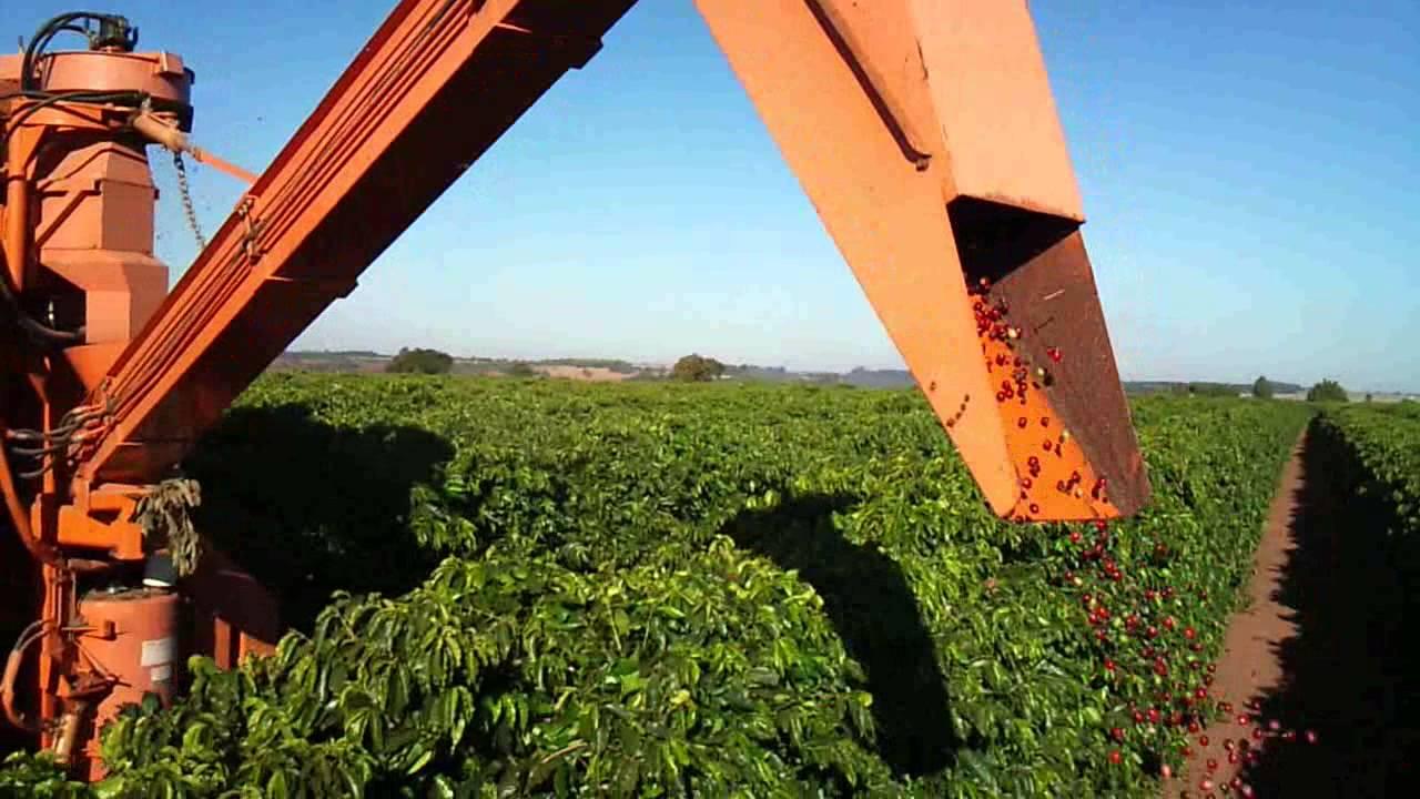 0c91011e47 Arquivo - Muzambinho.com