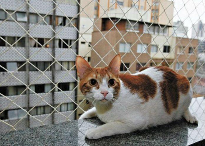 animais-em-condominios-regras-sj-imoveis-fortaleza-03-696x497