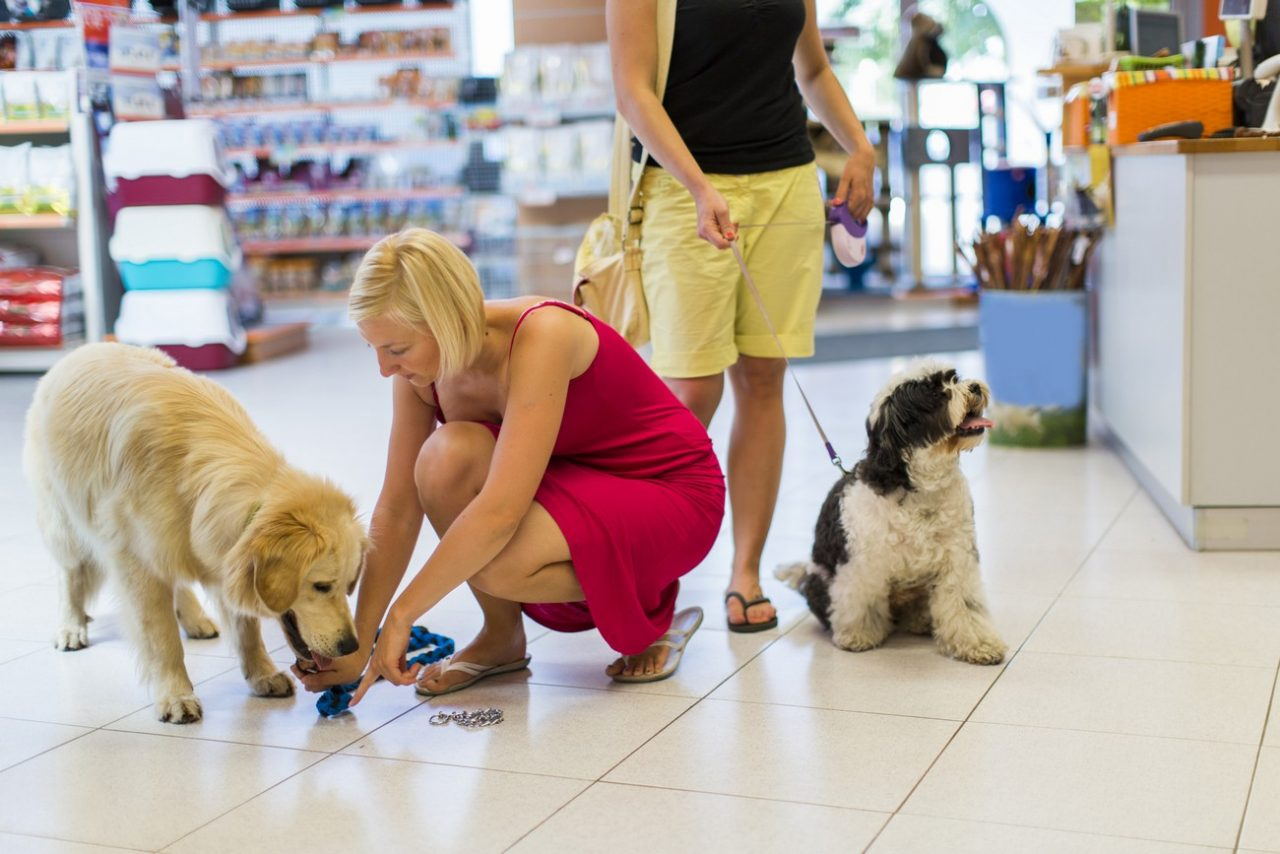 Cute Golden retriever and Tibetan Terrier in pet store