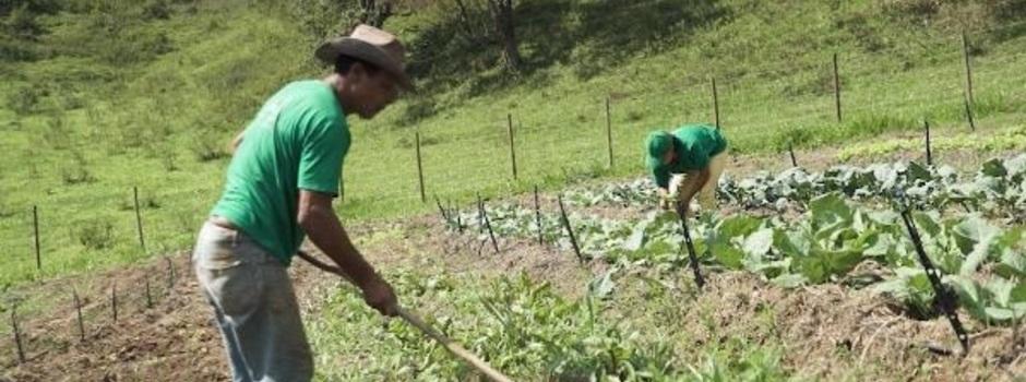 agricultores_na_horta