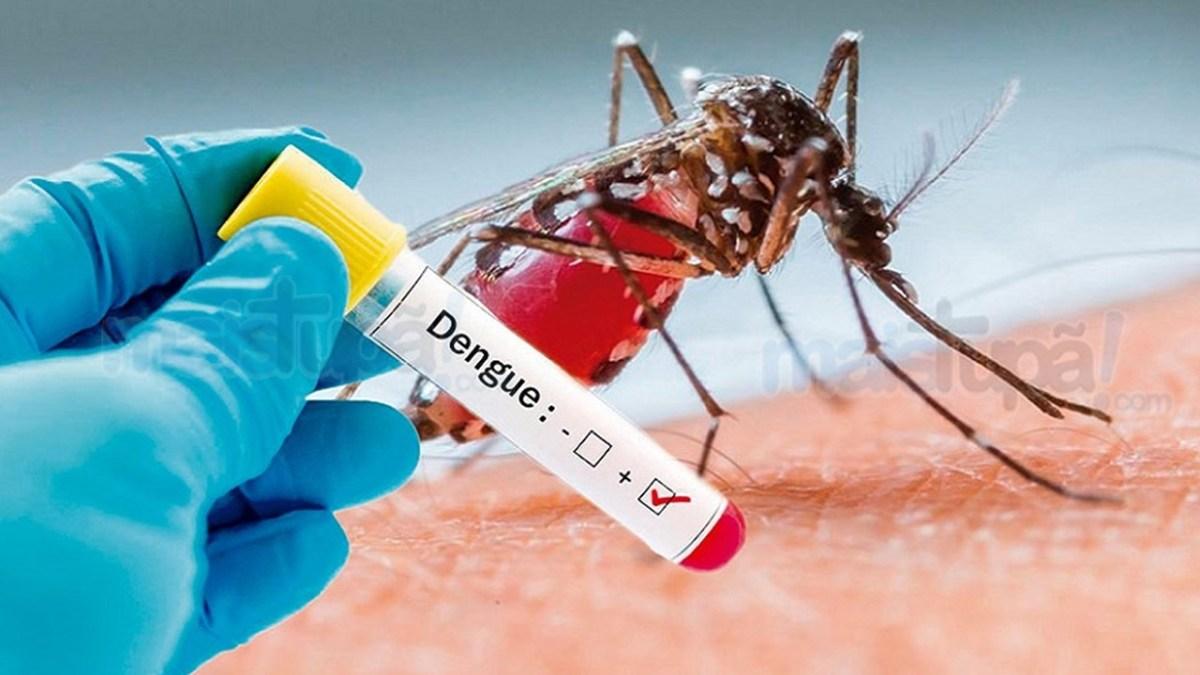 dengue12547